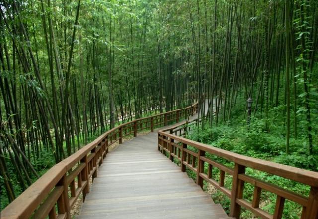 Chiêm ngưỡng 6 khung cảnh thiên nhiên tươi đẹp và hùng vĩ khi đi du học Hàn Quốc