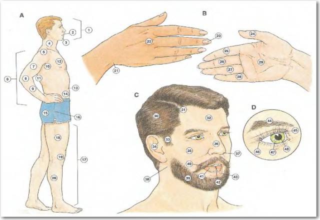 50 từ vựng thường dùng trong giao tiếp bằng tiếng Hàn về chủ đề cơ thể con người