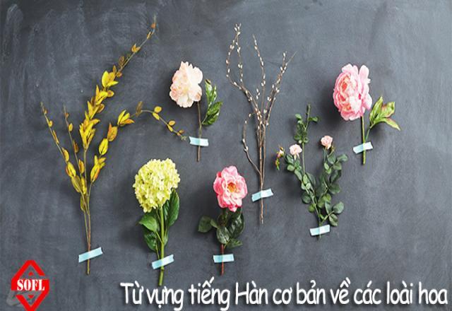 Từ vựng tiếng Hàn bằng hình ảnh thú vị về các loài hoa