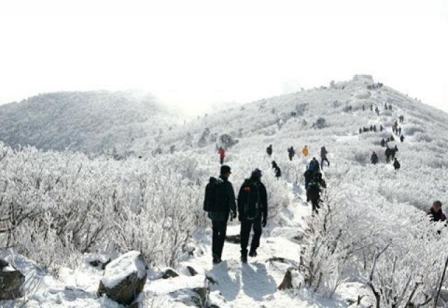 """""""Ngả mũ"""" trước vẻ đẹp của núi tuyết  Taebaeksan tại Hàn Quốc"""